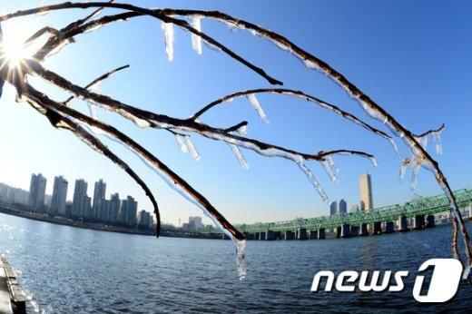 [사진]'주렁주렁 열린 얼음꽃'