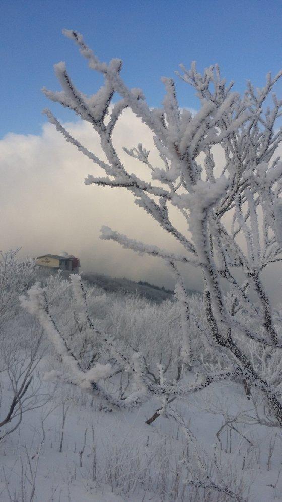 겨울 소백의 매력은 장관을 이룬 '상고대'다. 상고대는 눈꽃이 아니다. 기온이 급하강하면서 공기중 물방울이 쌓인, 차라리 '서리꽃'에 가깝다. 사진은 2015년 1월 제1 연화봉에서 찍은 상고대. 멀리 천문대의 돔지붕이 보인다./사진=신혜선 부장