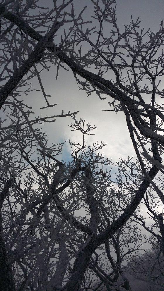 소백산 비로봉 가는 길의 하늘과 상고대. 2015년 1월. 갤노트3/사진=신혜선 부장
