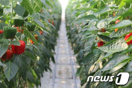 비타민C가 풍부한 채소./ © News1 이철우 기자