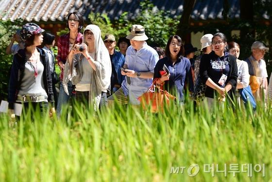 일본인 관광객들이 서울 종로구 창덕궁 후원에서 옥류천 주변에 심어진 벼를 둘러보고 있다./사진=뉴스1