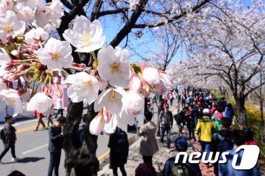 [사진]'벚꽃과 함께 봄을 만끽'