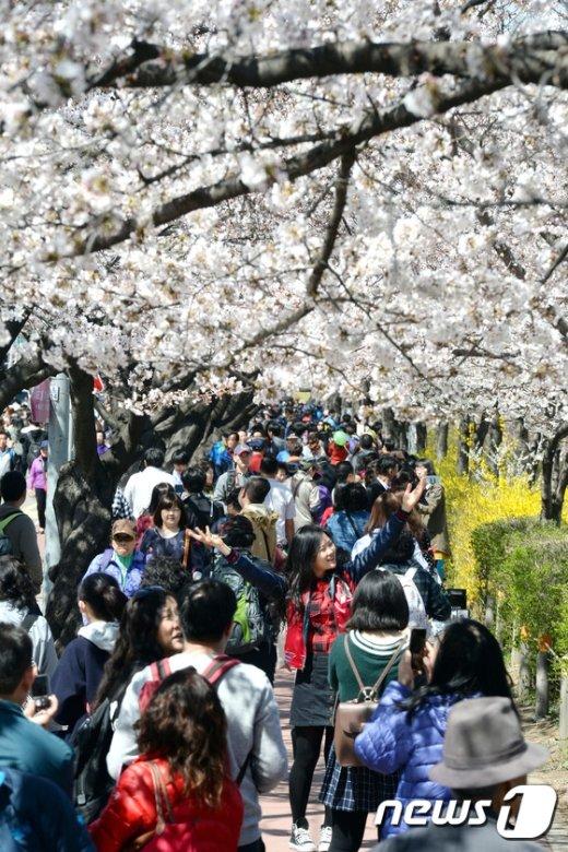 [사진]'벚꽃 아래서'