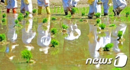[사진]논이 그린 수채화