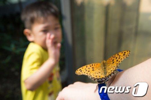 [사진]'내겐 너무 무서운 나비'
