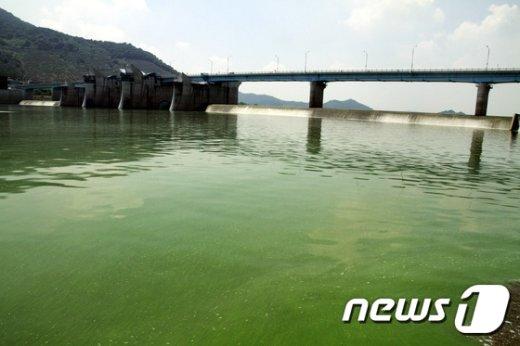 지난 12일 오후 낙동강 수계 경남 창녕 함안보를 흐르는 물은 녹색 물감을 풀어놓은 듯하다. © News1