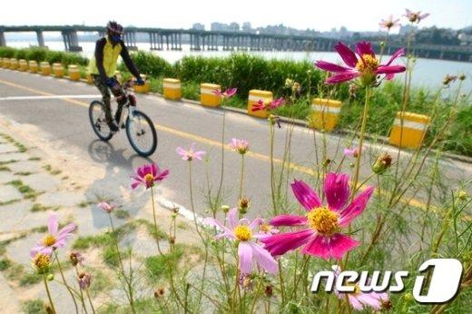 [사진]폭염 속 '가을의 전령'