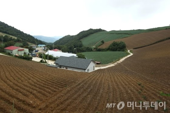 안반데기 마을. 28가구가 고랭지 배추농사를 짓고 있다/사진=이호준 시인·여행작가