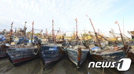 [사진]날로 심해지는 중국 어선 불법조업