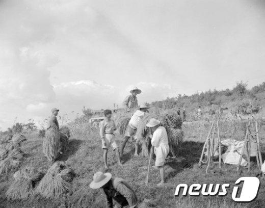 [사진]수확의 계절