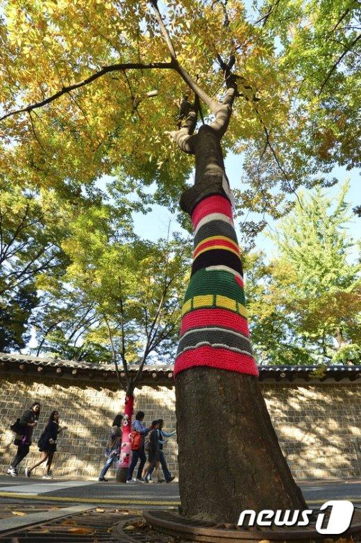 [사진]물들어가는 가을 '나무의 겨울준비'