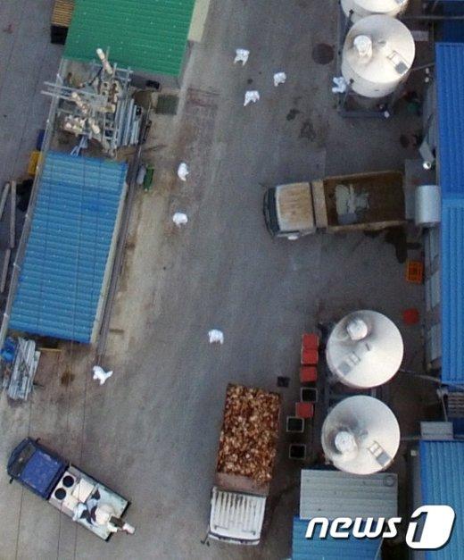[사진]'살처분 후 트럭으로 실려나가는 닭'