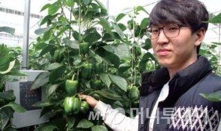 파밍온을 설치한 비닐하우스/사진=강릉과학산업진흥원