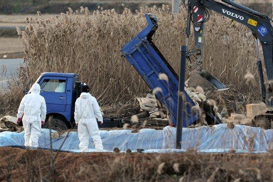 지난 11일 전남 나주시 한 종오리 농장에서 방역대원들이 매몰 작업을 하고 있는 모습. /사진= 뉴스1