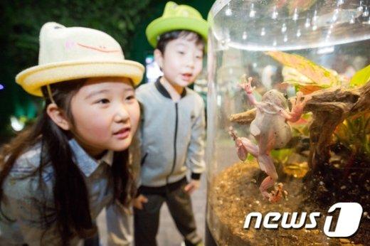 [사진]롯데월드 아쿠아리움에 개구리 보러 오세요!