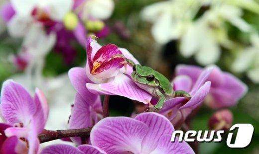 """[사진]""""청개구리가 봄인사 드려요~"""""""