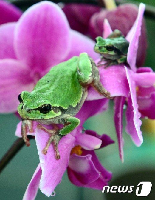 [사진]경칩 앞두고 잠 깬 개구리