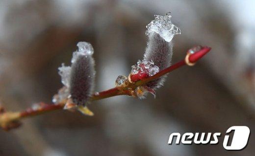 [사진]봄과 겨울