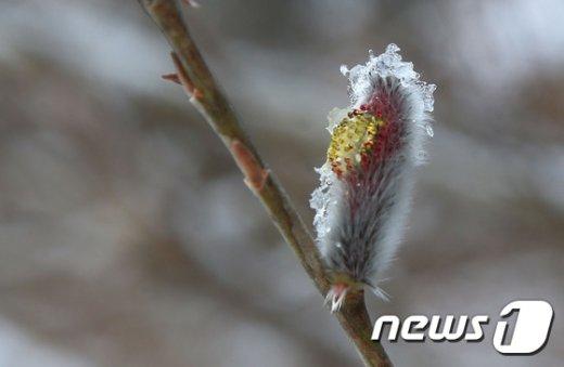 [사진]'봄눈'