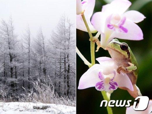 [사진]사흘 앞으로 다가온 경칩(驚蟄) '겨울과 봄 사이'
