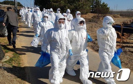 정부, 전남·광주 오리류 '일시 이동중지 명령' 발령