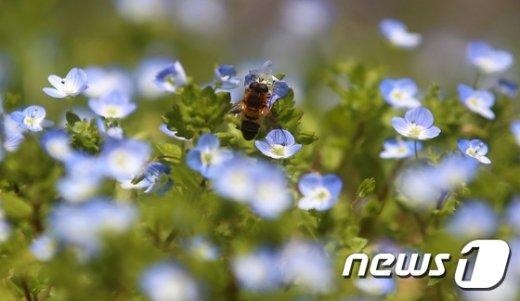 [사진]'부지런히 꿀을 따자'