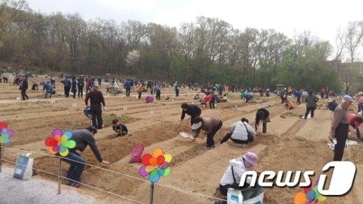 도봉구 쌍문동 친환경 나눔텃밭(도봉구 제공)2017.3.24© News1