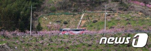 [사진]복숭아 꽃이 활짝 피었습니다
