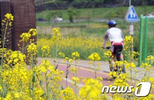 [사진]'유채꽃과 함께'