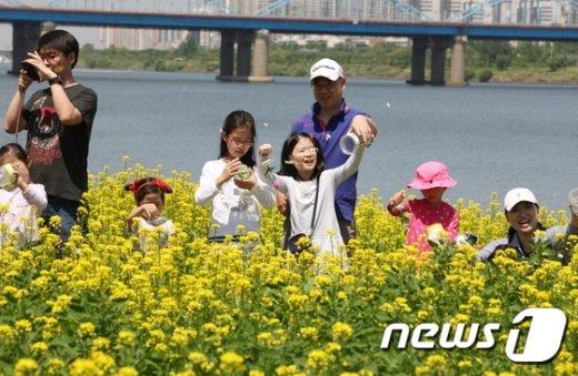 서울 반포한강공원 서래섬 유채꽃 축제(서울시 제공)© News1