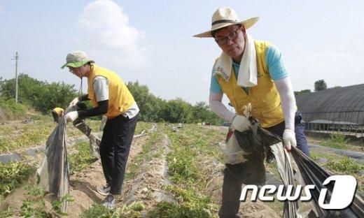 [사진]'감자밭 일손도와요'