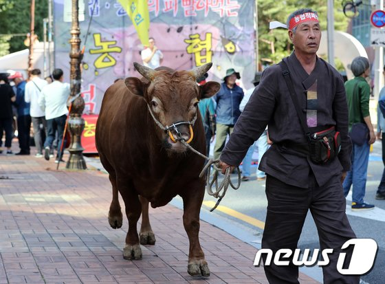 [사진]'집회 따라나선 소'