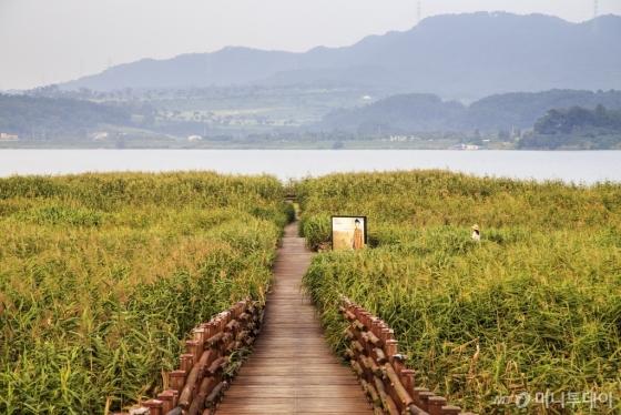 충남 서천 신성리 갈대밭. 가을 정취가 물씬 풍겨난다. /사진=정은주<br />