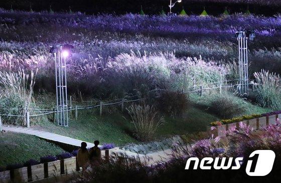 [사진]오색빛으로 물든 억새밭