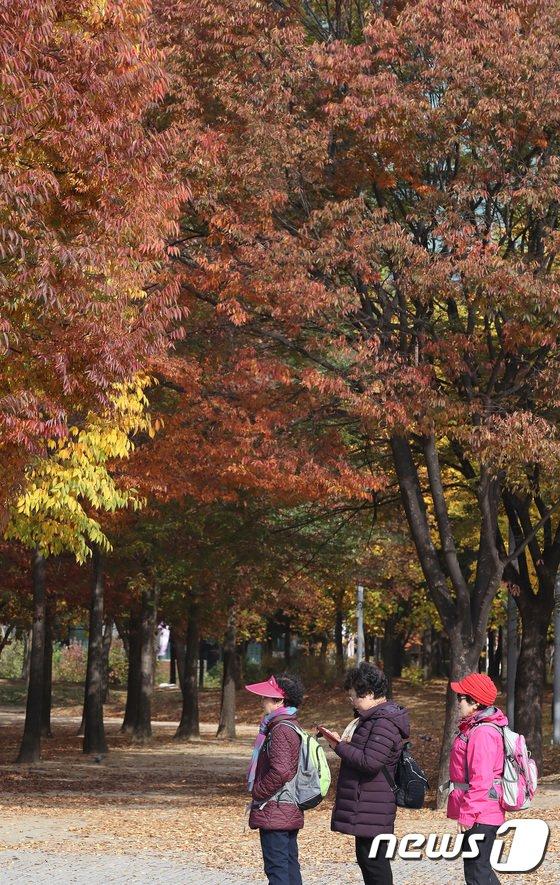 [사진]'붉게 물든 가을단풍'