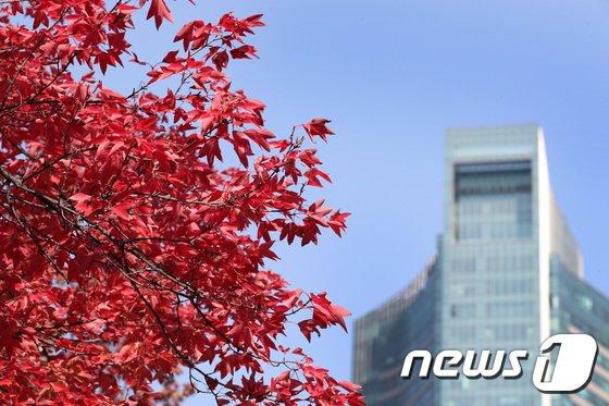 [사진]'빨간 단풍 사이로 파란 하늘'