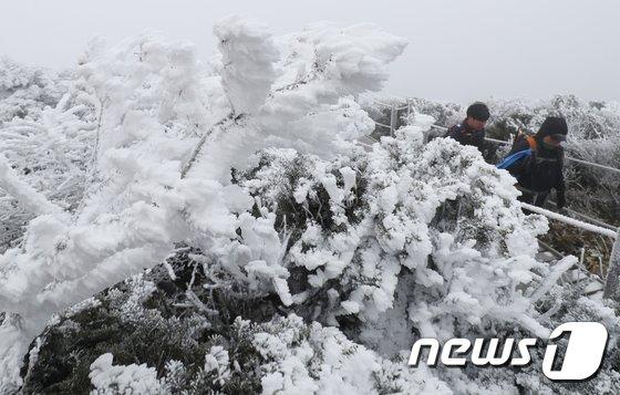 [사진]한라산에 첫눈...'눈꽃' 황홀경