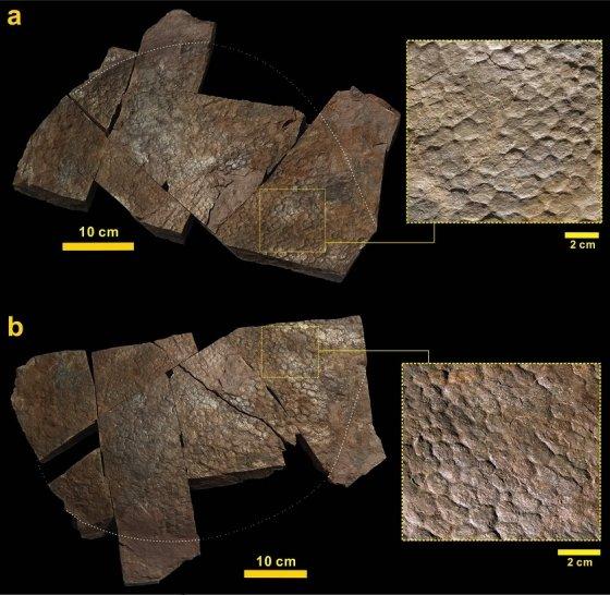 경남 함안군에서 발견된 용각류 공룡의 발자국과 그 캐스트에 뚜렷이 보존된 다각상 요철의 발바닥 피부조직 인상(백인성 외(2017) 사이언티픽 리포츠 제공)