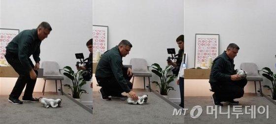 지난 11일(미국 현지시간) 라스베이거스 컨벤션 센터(LVCC) 노스홀에 위치한 소니 부스의 한켠에 마련된 인공지능 로봇 반려견 아이보(aibo)의 시연 도중 또 다시 시스템이 아웃되는 일이 생기자, 현장 직원이 아이보를 재부팅하는 듯한 동작을 하고 있다./사진=오동희 기자.