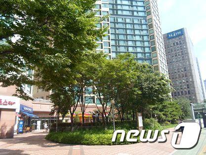 서울 마포구 마포대로에 자리한 느티나무.(마포구 제공) © News1