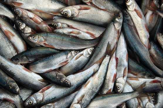 반 호수에서 잡은 물고기 '임지케파르'/사진=이호준 여행작가