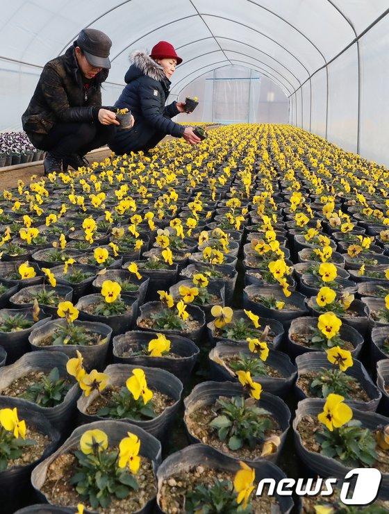 [사진]시나브로 찾아오는 봄