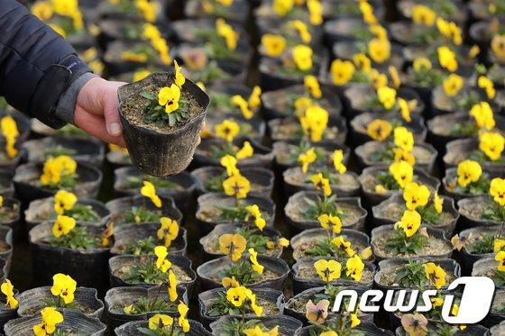 [사진]'어느새 봄'