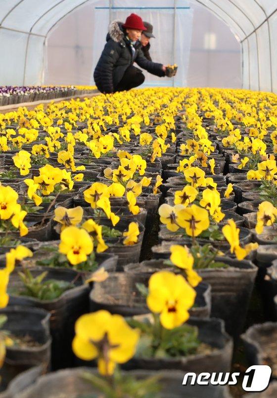 [사진]'봄이 와요'