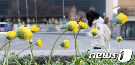 [사진]'꽃은 폈지만 봄은 아직'