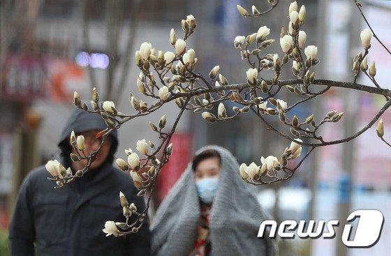 [사진]찬바람 동반한 꽃샘추위