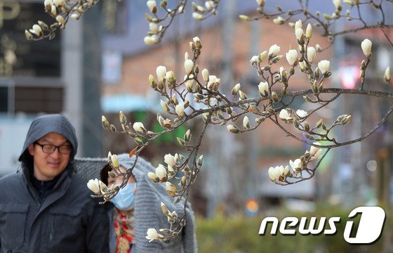 [사진]하얀 꽃샘추위