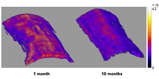 엘라니르에 의해 염색된 젊은 생쥐와 늙은 생쥐의 엘라스틴 3차원 영상/사진=IBS