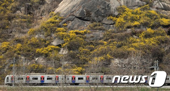 [사진]'개나리 열차'