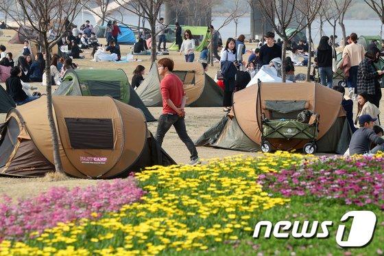 [사진]텐트치고 꽃구경해요